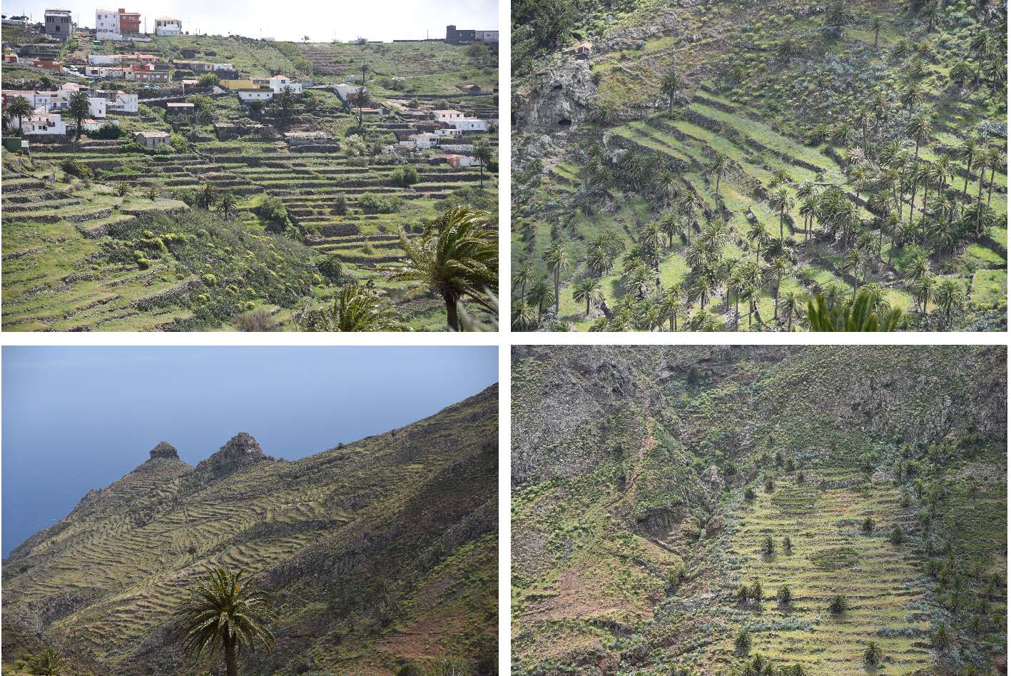 Pictures 9–12: Views of rich in terraces La Gomera Island.