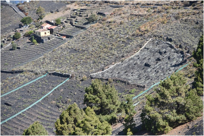 Picture 3: Vineyard on the Island of La Palma.